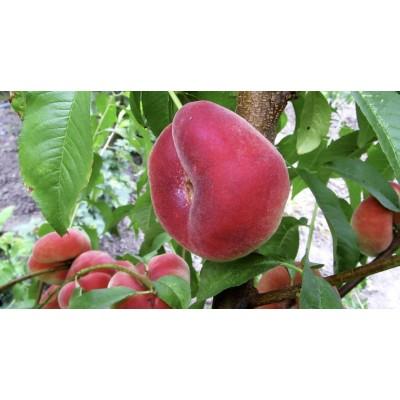 Инжирный персик Пинк Ринг: фото и описание сорта