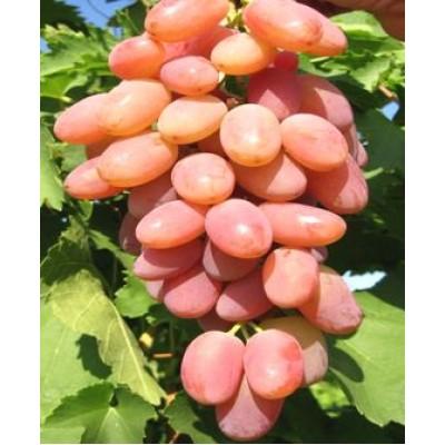 """Виноград """"Ух-ты"""": отзывы и описание сорта"""